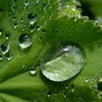 Zöld takarítás tippek